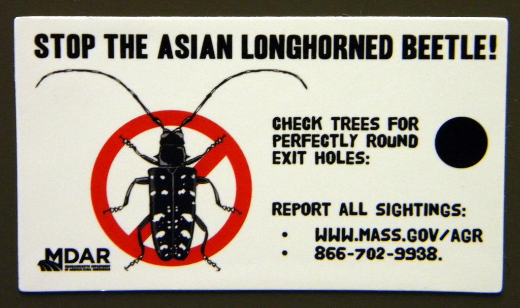 USDA APHIS Asian Longhorned Beetle - Massachusetts