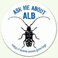 Asian longhorned beetle button