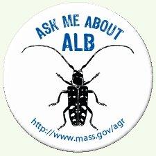 Asian longhorned beetle button