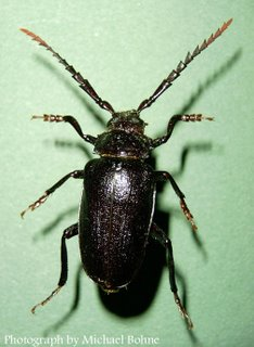 Massachusetts Introduced Pests Outreach Blog » Blog Archive