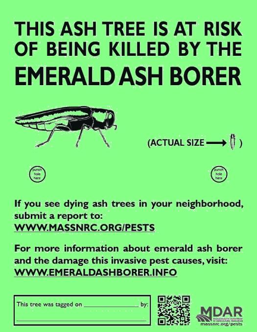EAB Tag for Ash Trees