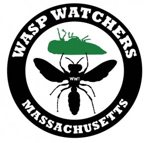 Wasp Watchers Massachusetts