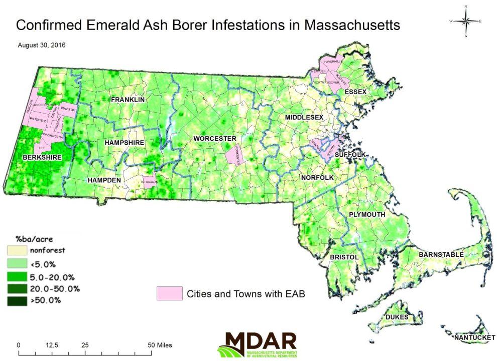 Emerald Ash Borer Agrilus Planipennis - Emerald ash borer map